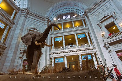 the-smithsonian-natural-history-museum